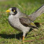 دراسات حديثة حول الاختلافات السلوكية بين الطيور الريفية والحضرية