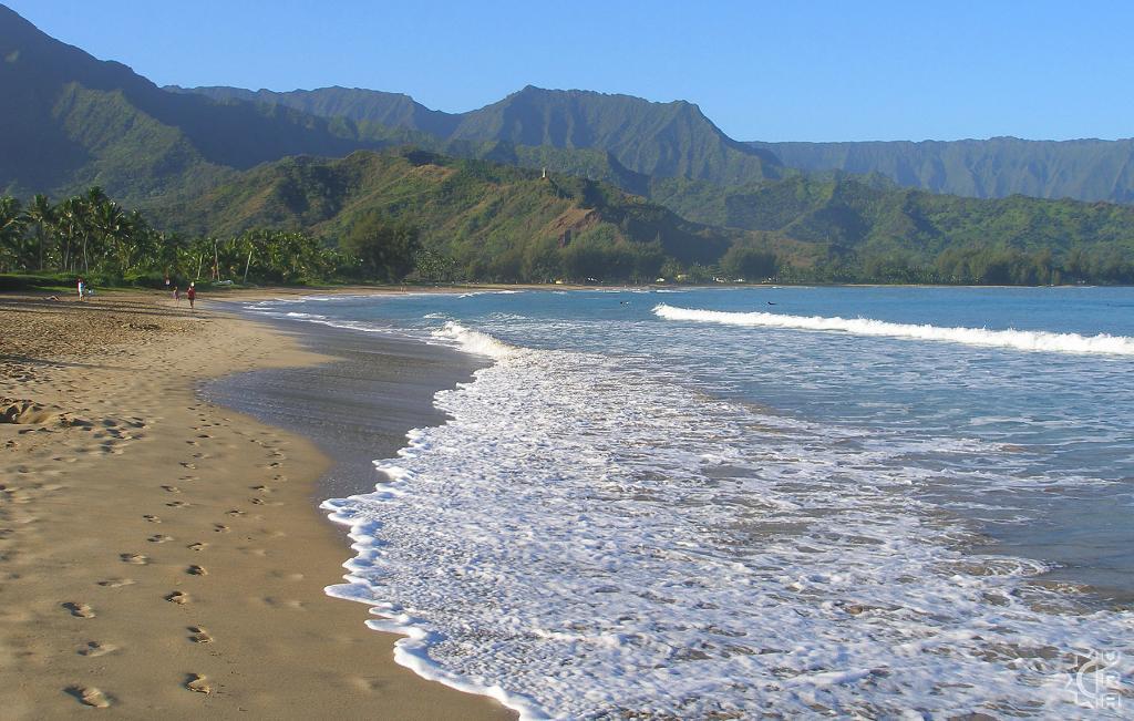 بلاك بوت بهاواي - أجمل الشواطئ للأطفال بامريكا