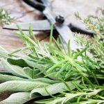 علاج اليرقان عند الكبار بالاعشاب