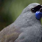 تغريد الطيور يحميها من الانقراض