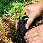 موسم بذرة الست للزراعة بالمملكة