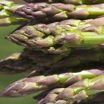 كيفية زراعة نبات الهليون و أهم استعمالاته