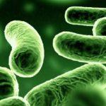 اعراض نقص البكتيريا النافعة في الامعاء