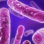 اكتشاف طريقة جديدة للقضاء على البكتيريا