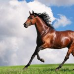 كيفية استخدام الخيول في علاج الإدمان