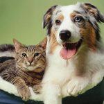 الإختلافات بين القطط والكلاب
