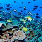 معلومات عن أنواع الحيوانات البحرية