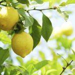 الفيتامينات الموجودة في الليمون