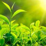 دراسة : كيفية تعامل النباتات مع الجوع عند نقص الطاقة الشمسية