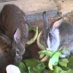 كيفية بناء بيت الأرانب بالمنزل وافضل السلالات للتربية