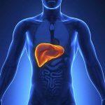 اكتشاف جديد بديل لزراعة الكبد