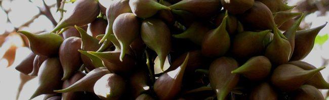 فوائد وأضرار نبات المر نبات-المر-65