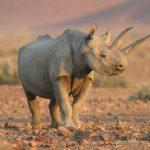 اسباب انقراض حيوان وحيد القرن
