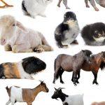 قائمة باسماء اصوات الحيوانات والطيور