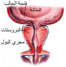 بذور اليقطين و علاقتها بأمراض البروستاتا المرسال