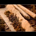 الفرق بين الماريجوانا والحشيش