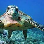 اسباب تهدد بانقراض السلاحف البحرية