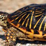 حقائق علمية مثيرة حول السلاحف