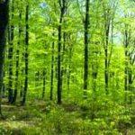 Photo of تفسير رؤية الغابة في المنام