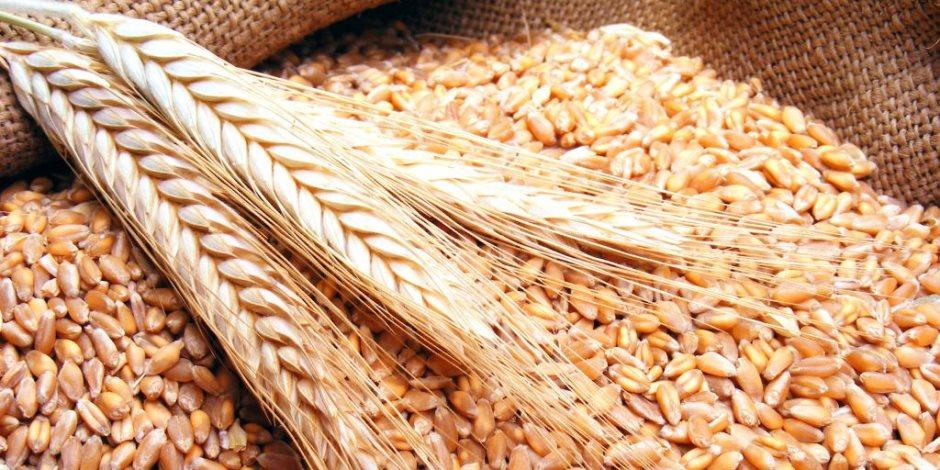 الفرق بين القمح والشعير المرسال
