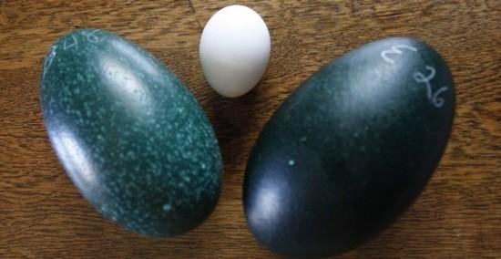 مختلفه لتناول البيض
