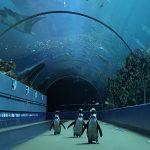 الكائنات البحرية الدقيقة ودورها في الحفاظ على النظام الإيكولوجي