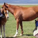الفوائد الصحية لحليب الحصان