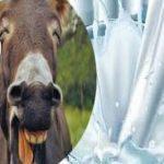 فوائد غير متوقعة لحليب الحمير