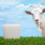 فوائد حليب الماعز لمرضى السكر
