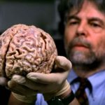 قرن آمون هو المسئول الأول عن تنظيم العواطف في الدماغ