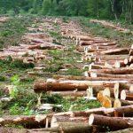 ما يمكن أن يحدث اذا قطعت أشجار العالم