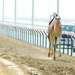 نادي دبي لسباقات الهجن بالإمارات و أهم مهرجاناته