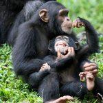 ترتيب ذكاء الحيوانات