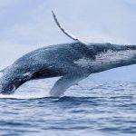 رحلة بحرية لمشاهدة الحياة البرية في أنكوريج بألاسكا
