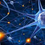 معلومات عن السيالة العصبية
