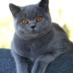 أغرب أنواع قطط في العالم