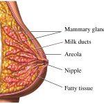 امكانية العلاج من سرطان الثدي في المرحلة صفر