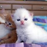فوائد علمية لتربية القطط