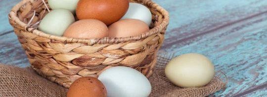 تناول البيض لا يشكل خطورة على مرضى القلب والسكري %D8%AA%D9%86%D8%A7%D9%88%D9%84-%D8%A7%D9%84%D8%A8%D9%8A%D8%B6-540x198