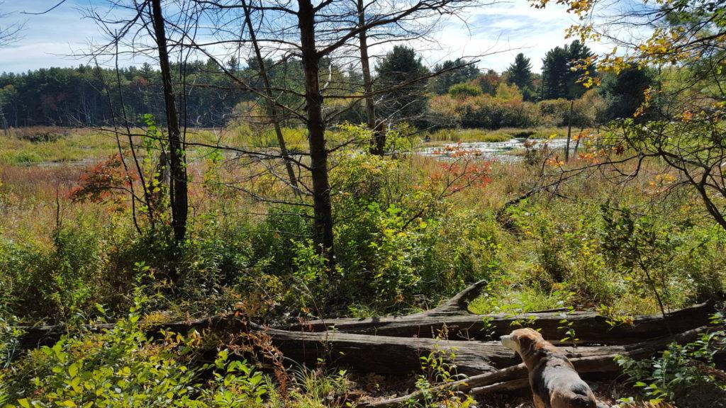 مدينة لوويل الامريكية بالصور غابة-الولاية-لويل-در
