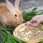 أسباب وأعراض فقدان الشهية عند الأرانب