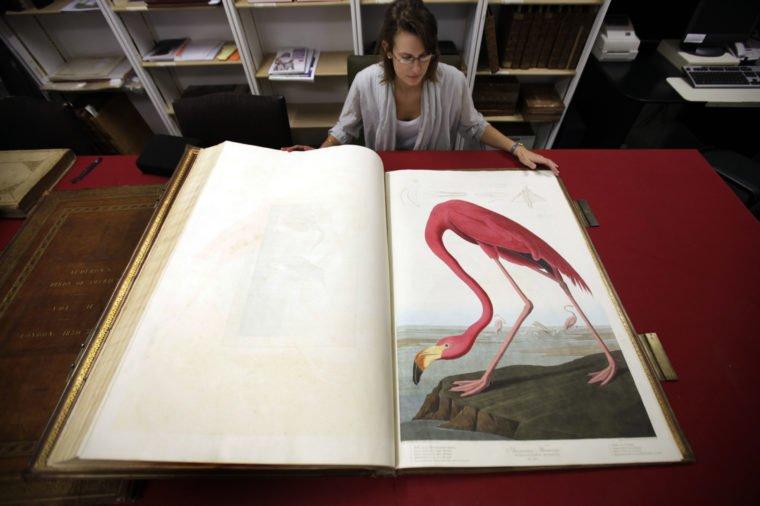 """نتيجة بحث الصور عن كتاب """"طيور أمريكا"""""""