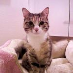 أعراض وعلاج اللوكيميا في القطط