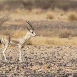 التنوع الأحيائي بالمملكة وفق الاستراتيجية الوطنية للبيئة 2018