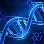 تأثير النظام الغذائي على الطفل من الناحية الجينية