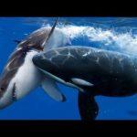 الفرق بين الحوت وسمك القرش