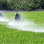 استخدام المواد الكيميائية الزراعية يهدد الصحة والبيئة بالصين