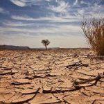 احتفال الكويت باليوم العالمي لمكافحة التصحر و الجفاف