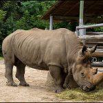 حديقة حيوان روستوف - 661849