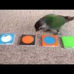 دراسة توضح سر ذكاء الطيور